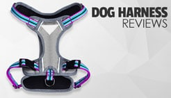 dog harness reviews